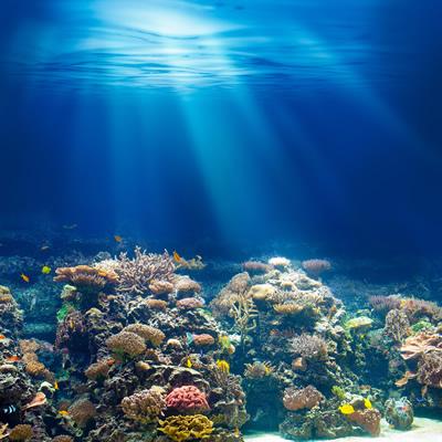 海の底は魅力いっぱい